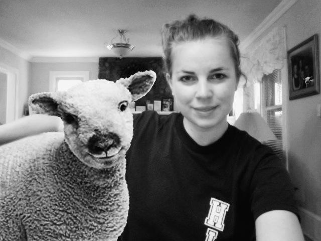 sheep_photo